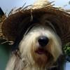 Huetehund3