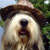 Huetehund4
