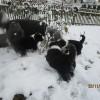 Schnee_3